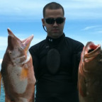 Hogfish and red grouper