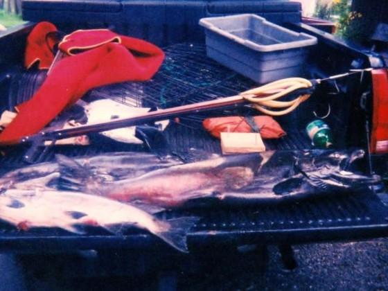 2003 king salmon