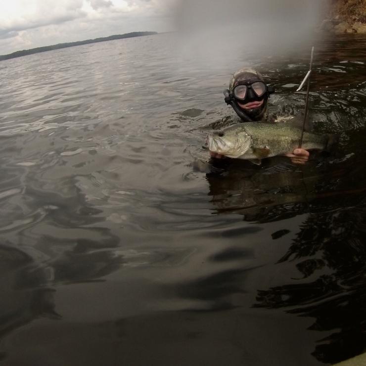 Arkansas Large Mouth Bass